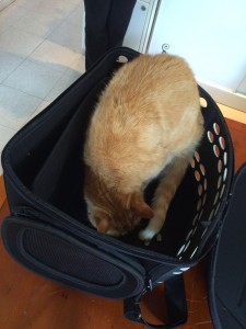 Get your cat to the vet in an open top carrier!