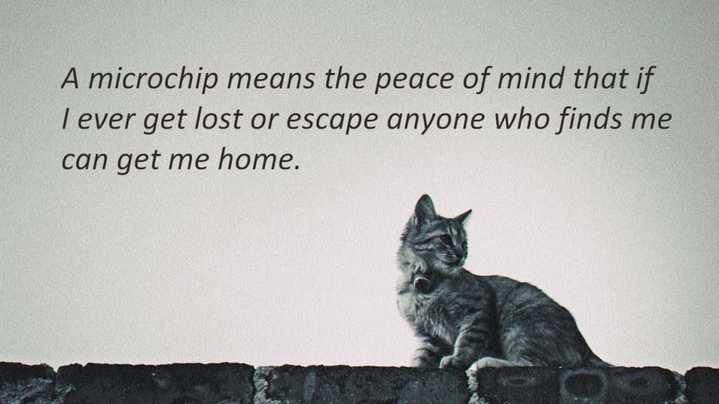 A microchip will ensure you cat the best chances of getting home