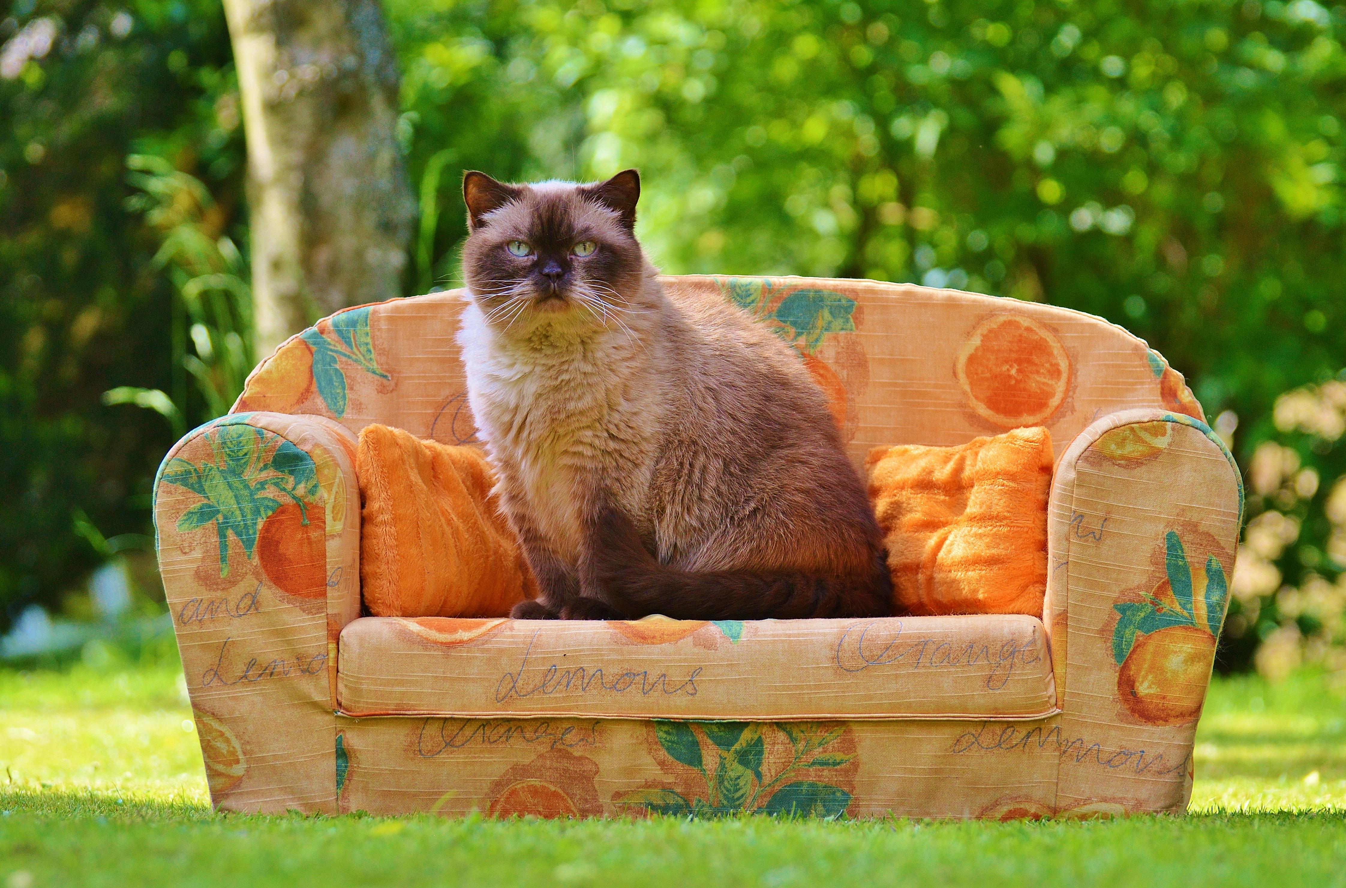 cat couch potato